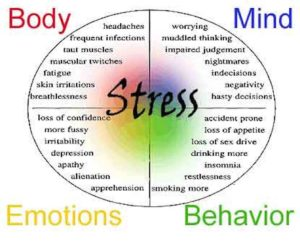 Stress and its effects
