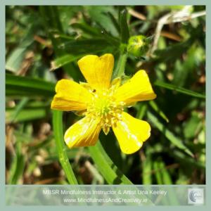 Buttercups & Mindfulness Article