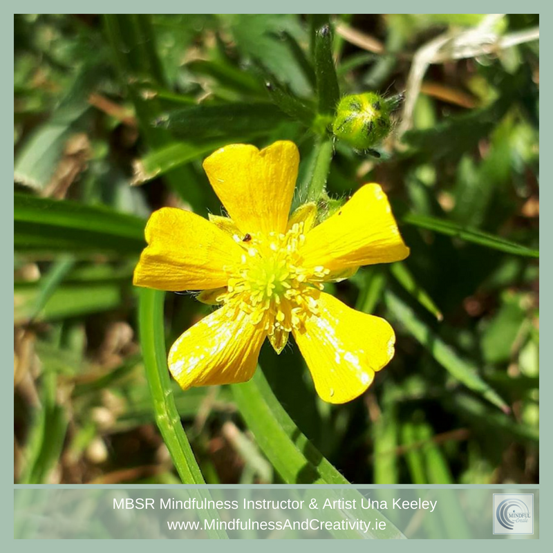 Buttercups & Mindfulness Article
